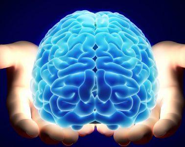 Nuclino, le cerveau de votre équipe