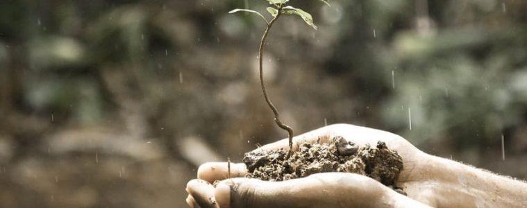 RSE : entreprises et environnement
